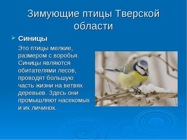 Зимующие птицы Тверской области Синицы Это птицы мелкие, размером с воробья....