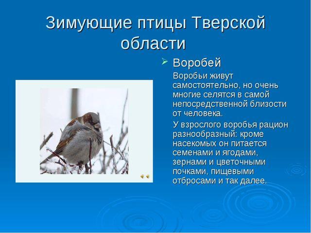 Зимующие птицы Тверской области Воробей Воробьи живут самостоятельно, но очен...