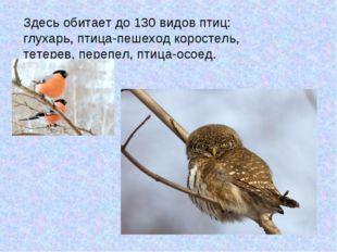 Здесь обитает до 130 видов птиц: глухарь, птица-пешеход коростель, тетерев, п