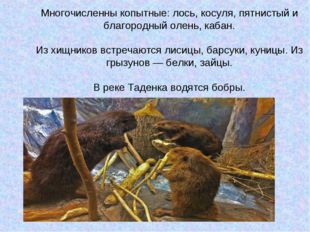 Многочисленны копытные: лось, косуля, пятнистый и благородный олень, кабан. И