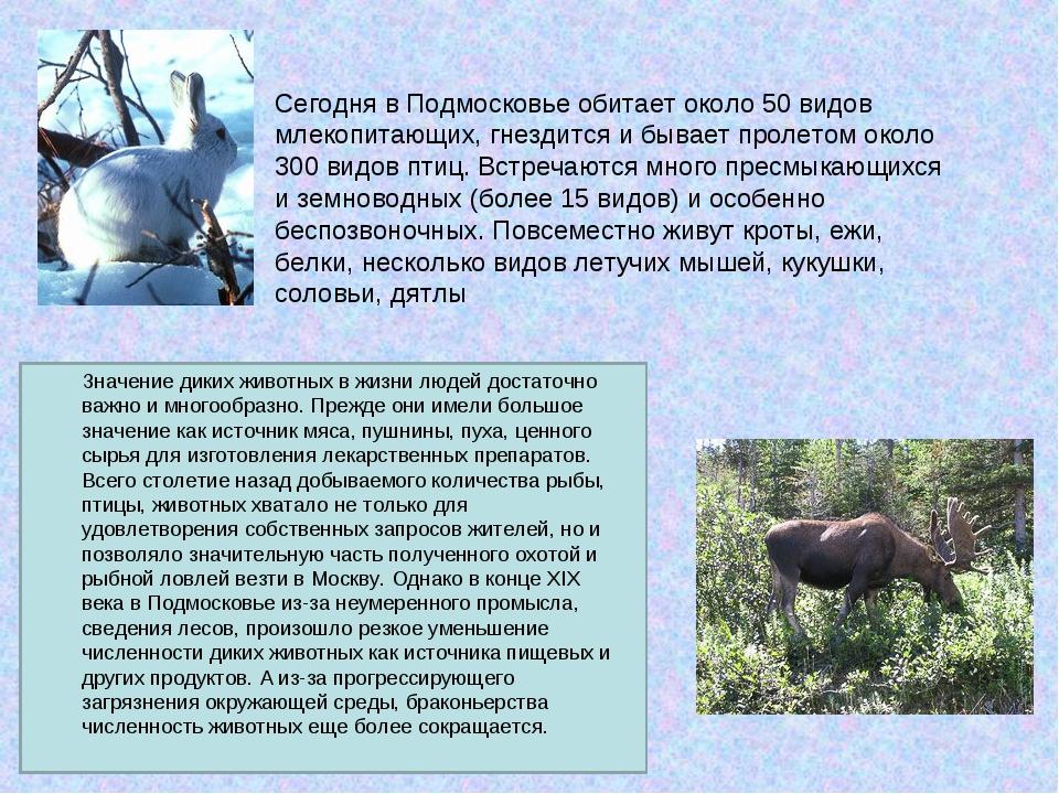 Сегодня в Подмосковье обитает около 50 видов млекопитающих, гнездится и бывае...
