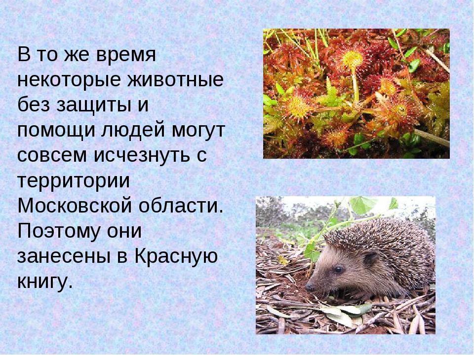 В то же время некоторые животные без защиты и помощи людей могут совсем исчез...
