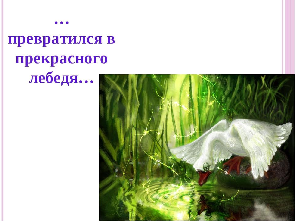 … превратился в прекрасного лебедя…