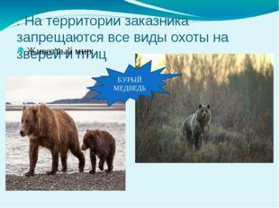 . На территории заказника запрещаются все виды охоты на зверей и птиц Животны