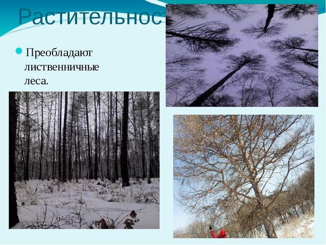 Растительность Преобладают лиственничные леса.