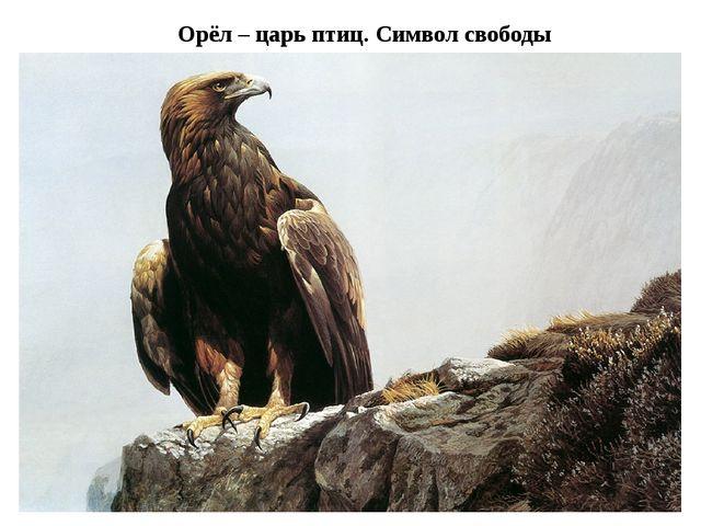 Орёл – царь птиц. Символ свободы