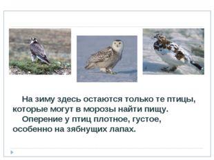 На зиму здесь остаются только те птицы, которые могут в морозы найти пищу. О