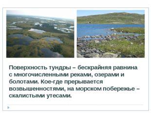 Поверхность тундры – бескрайняя равнина с многочисленными реками, озерами и б