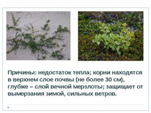 Причины: недостаток тепла; корни находятся в верхнем слое почвы (не более 30