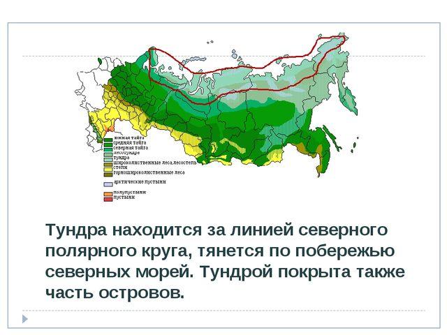 Где находится тундра в россии на карте