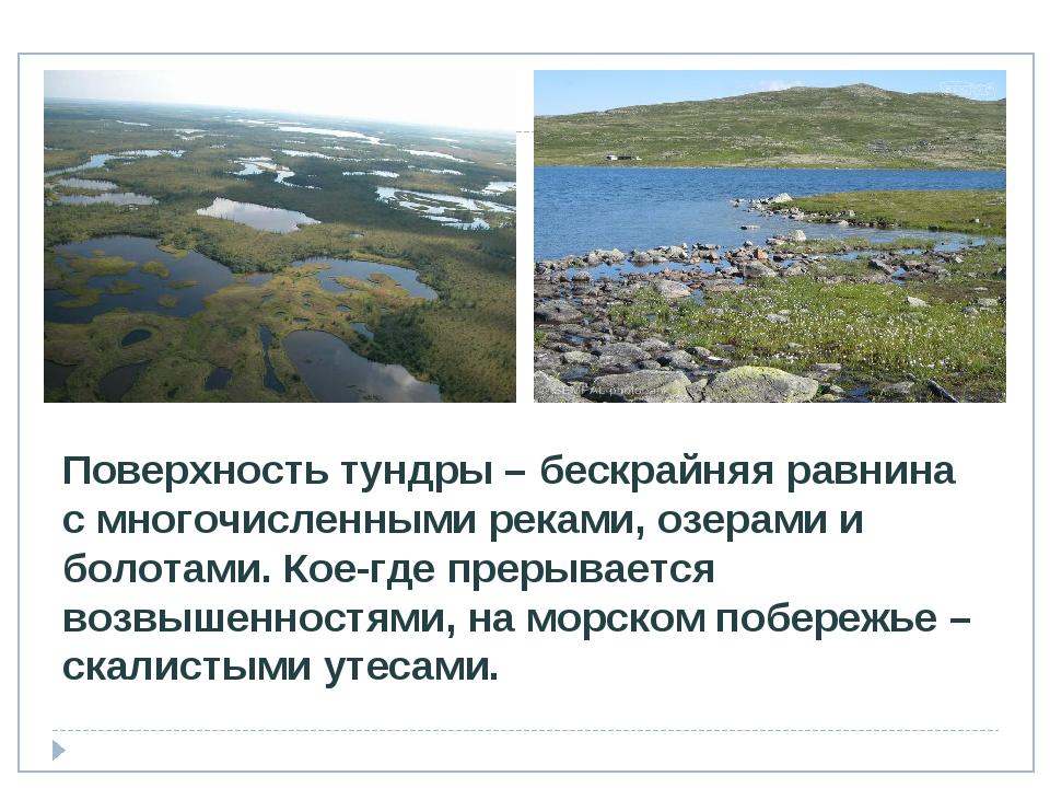 Поверхность тундры – бескрайняя равнина с многочисленными реками, озерами и б...