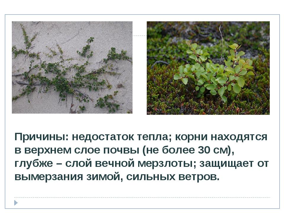 Причины: недостаток тепла; корни находятся в верхнем слое почвы (не более 30...