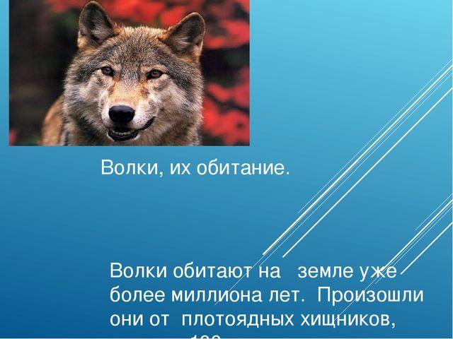 Волки, их обитание. Волки обитают на земле уже более миллиона лет. Произошли...