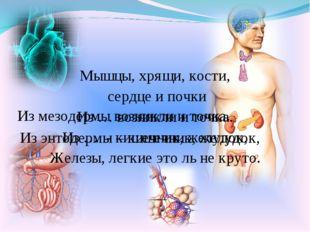 Мышцы, хрящи, кости, сердце и почки Из … возникли и точка. Из … - кишечник, ж