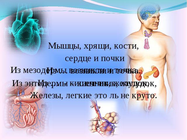 Мышцы, хрящи, кости, сердце и почки Из … возникли и точка. Из … - кишечник, ж...