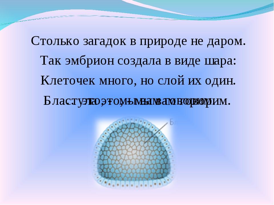 Столько загадок в природе не даром. Так эмбрион создала в виде шара: Клеточек...