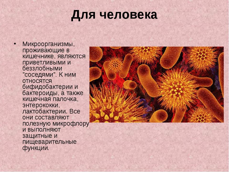 Микроорганизмы, проживающие в кишечнике, являются приветливыми и беззлобными...