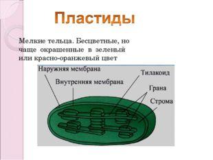 Мелкие тельца. Бесцветные, но чаще окрашенные в зеленый или красно-оранжевый