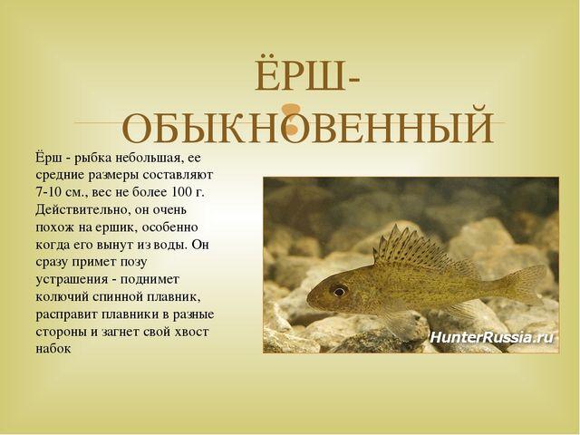 ЁРШ-ОБЫКНОВЕННЫЙ Ёрш - рыбка небольшая, ее средние размеры составляют 7-10 см...
