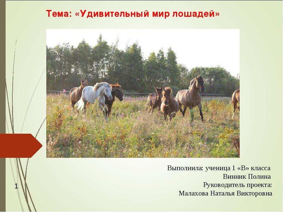 Тема: «Удивительный мир лошадей» Выполнила: ученица 1 «В» класса Винник Полин...