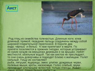 Род птиц из семейства голенастых. Длинные ноги, клюв длинный, прямой; передн