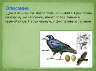 Длина 45—47см, масса тела 310—490 г. Грач похож на ворону, но стройнее, име