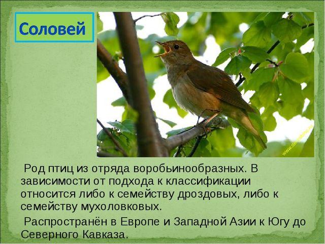 Род птиц из отряда воробьинообразных. В зависимости от подхода к классификац...