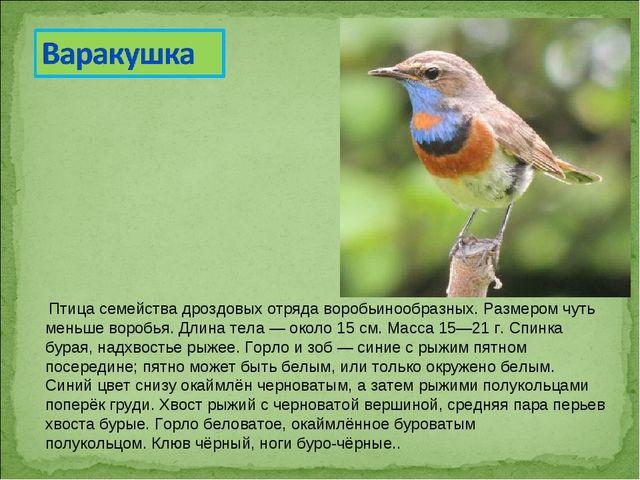 Птица семействадроздовыхотрядаворобьинообразных. Размером чуть меньше вор...