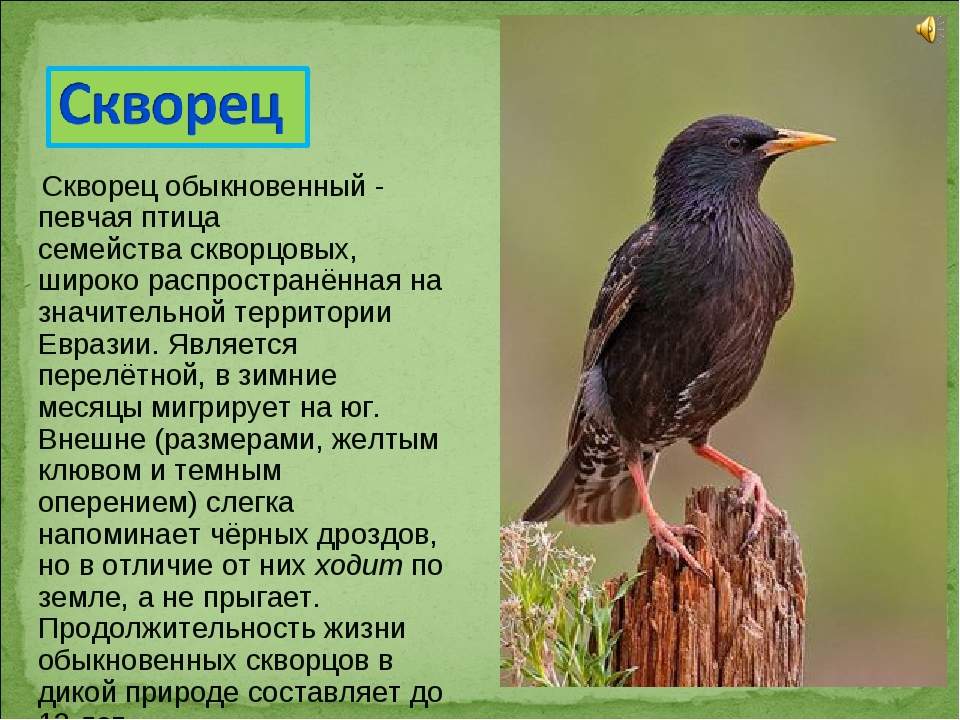 память фото и рассказы о птицах отличается