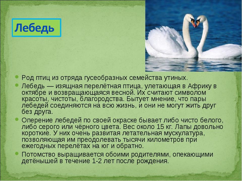 Родптициз отрядагусеобразныхсемействаутиных. Лебедь — изящная перелётная...