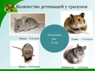 Количество детенышей у грызунов Мышь – 4-8 штук Крыса – 5-10 штук Хомяк – 5-1