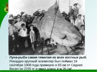 Луна-рыба самая тяжелая из всех костных рыб. Рекордно крупный экземпляр был
