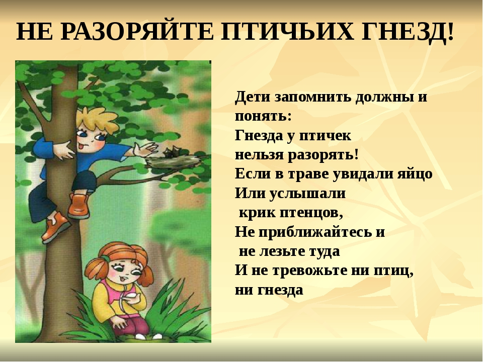 НЕ РАЗОРЯЙТЕ ПТИЧЬИХ ГНЕЗД! Дети запомнить должны и понять: Гнезда у птичек н...