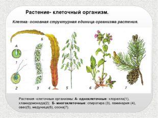 Растение- клеточный организм. Клетка- основная структурная единица организма