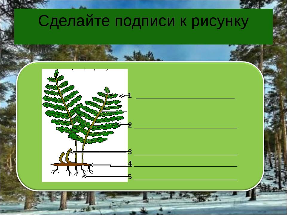 Сделайте подписи к рисунку 1 _________________________ 2 ____________________...