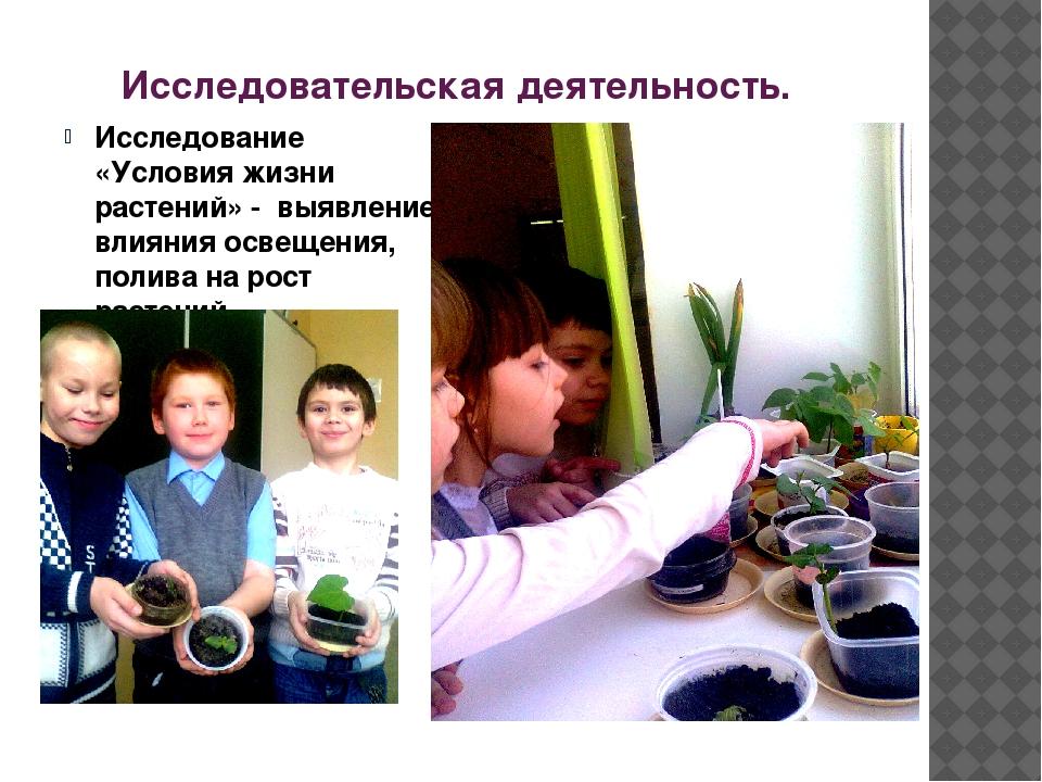 Исследовательская деятельность. Исследование «Условия жизни растений» - выявл...