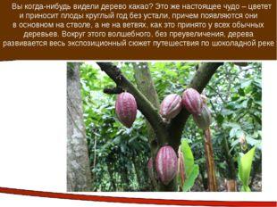 Вы когда-нибудь видели дерево какао? Это же настоящее чудо – цветет и принос