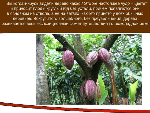 Вы когда-нибудь видели дерево какао? Это же настоящее чудо – цветет и принос...