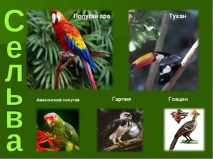 Попугай ара Тукан Гарпия Гоацин Амазонский попугай