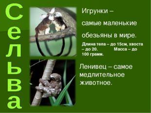 Игрунки – самые маленькие обезьяны в мире. Длина тела – до 15см, хвоста – до