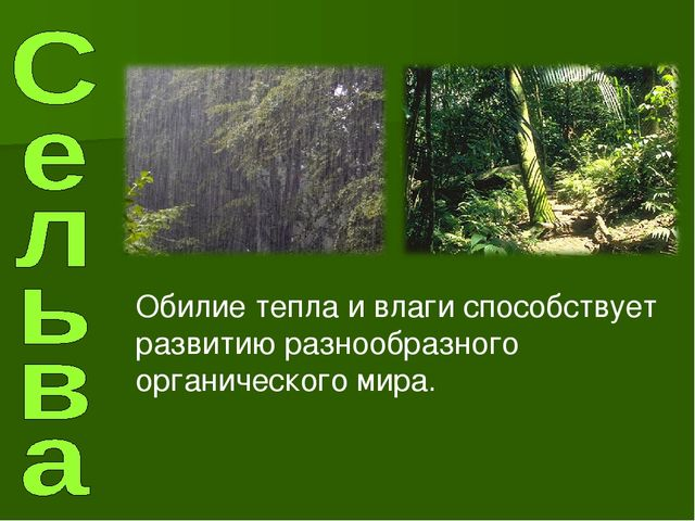 Обилие тепла и влаги способствует развитию разнообразного органического мира.