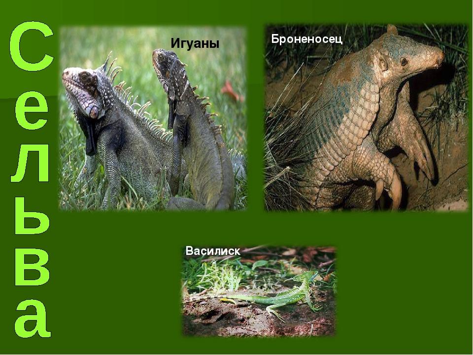 Игуаны Броненосец Василиск