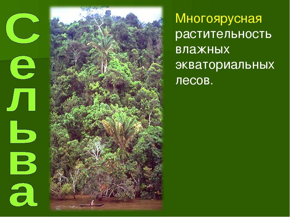 Многоярусная растительность влажных экваториальных лесов.