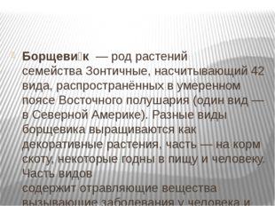 Борщеви́к—родрастений семействаЗонтичные, насчитывающий 42 вида, распро