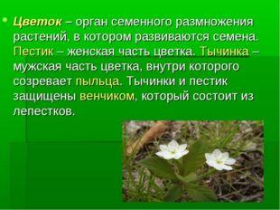 Цветок – орган семенного размножения растений, в котором развиваются семена.