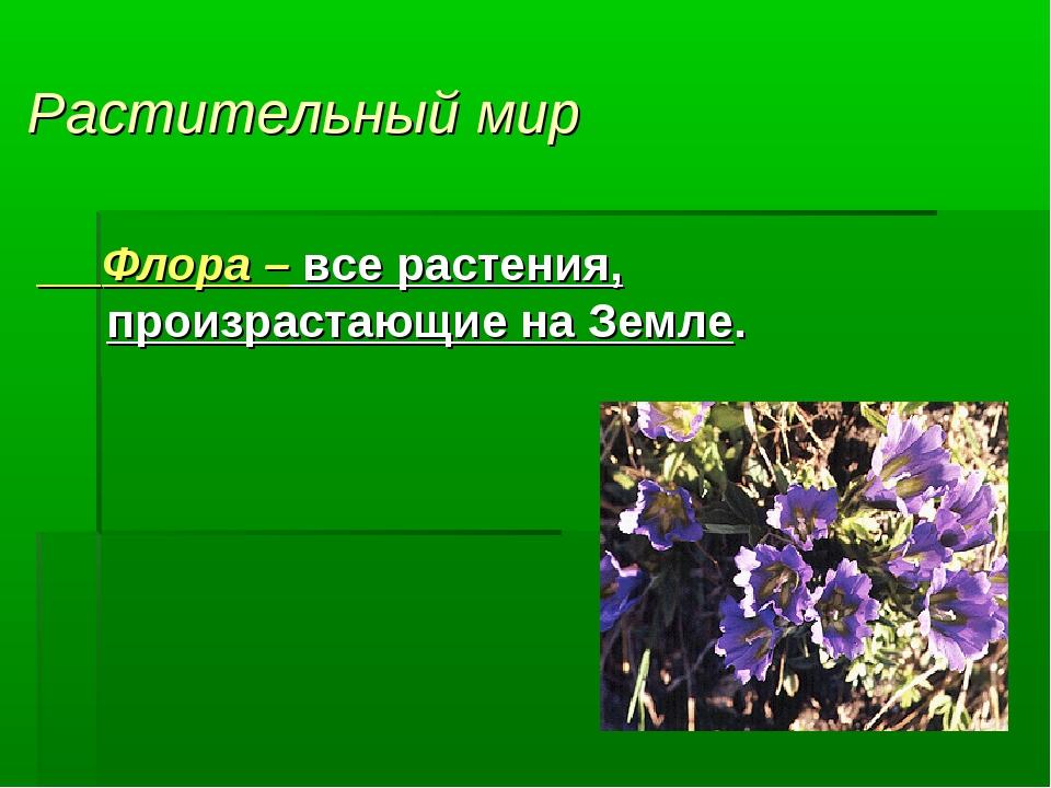 Растительный мир Флора – все растения, произрастающие на Земле.