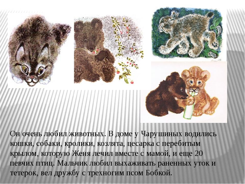 Он очень любил животных. В доме у Чарушиных водились кошки, собаки, кролики,...