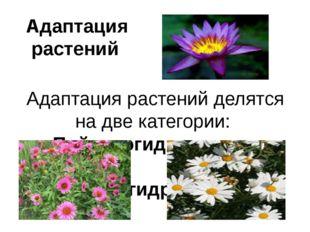 Адаптация растений Адаптация растений делятся на две категории: Пойкилогидрич