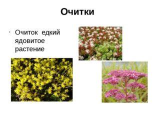 Очитки Очиток едкий ядовитое растение