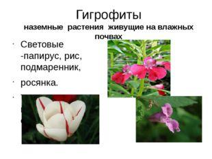 Гигрофиты наземные растения живущие на влажных почвах Световые -папирус, рис,
